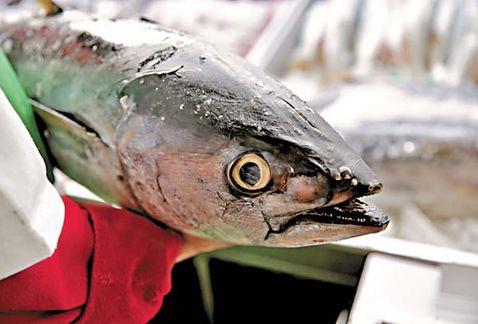 estadunidenses-incluyeron-Dolphin-proteccionista-comercio_MILIMA20170426_0062_8
